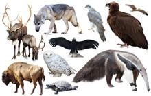 Set Of Fauna Of North American...