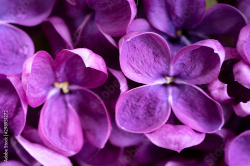 Photo sur Toile Fleuriste Fresh lilac flowers
