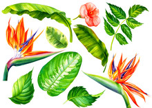 Set Of Jungle Leaves And Flowe...