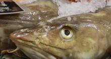 Raw Delicious Fresh Fish On Ic...