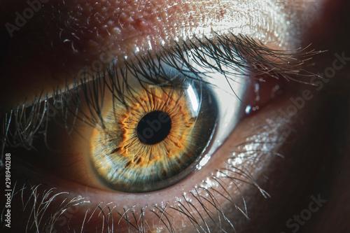 Poster Iris Beautiful close up human eye. Macro photography.
