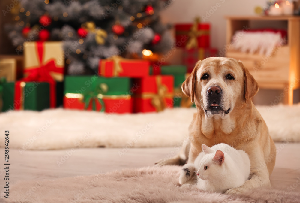 Fototapety, obrazy: Adorable dog and cat together at room decorated for Christmas. Cute pets