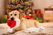 Adorable Cat And Dog With Christmas Hat Together At Home. Cute Pets