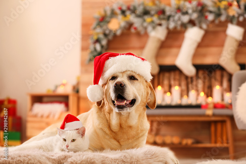 Adorable dog and cat wearing Santa hats together at room decorated for Christmas Canvas-taulu