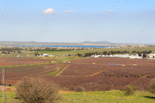 Border between Syria and Israeli occuppied Golan Heights with Quneitra Crossing Canvas Print