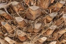Close Up Of  Palm Bark