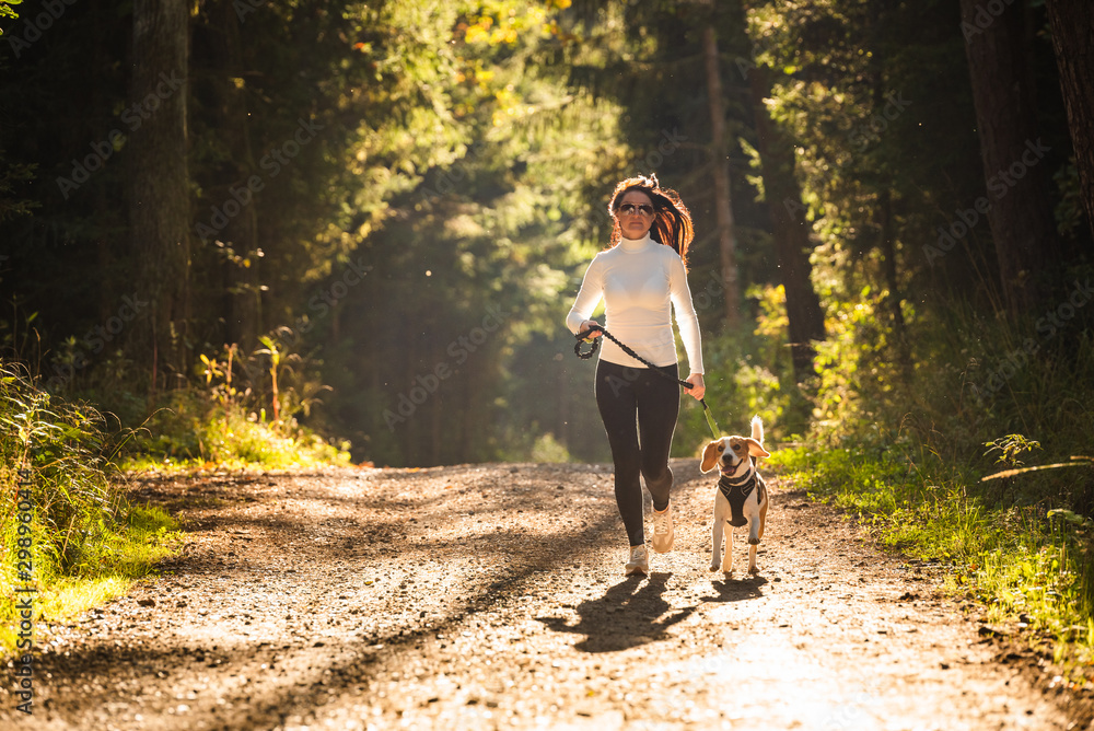 Fototapeta Girl is running with a dog (Beagle) on a leash in the autumn time, sunny day in forest. Copy space in nature