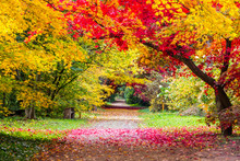 Colorful Leaves On Autumn Trees In The Park