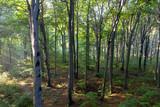 Rezerwat Segiet UNESCO Bytom lasy