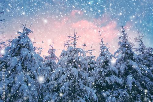 Montage in der Fensternische Rosa hell Winter landscape with fir trees and snowfall. Winter background.