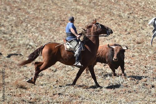 Fotomural  caballo y toro