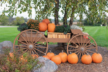 Cart Filled With Pumpkins In T...