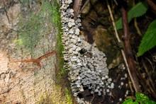 Accumulation Of Fungus Fairy I...