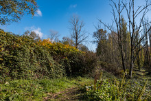 Narrow Trail In The Park Under The Blue Sky On A Sunny Day Surrounded By Few Leafless Trees And Dense Bushes Display Some Autumn Colour