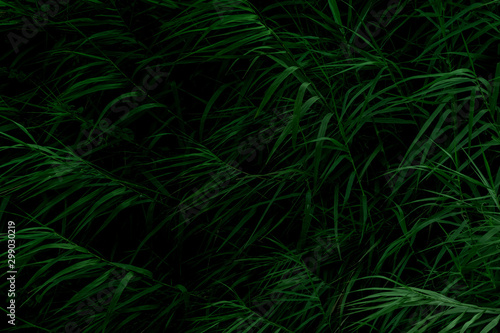 Natural tall grass texture in low light using for background Canvas Print