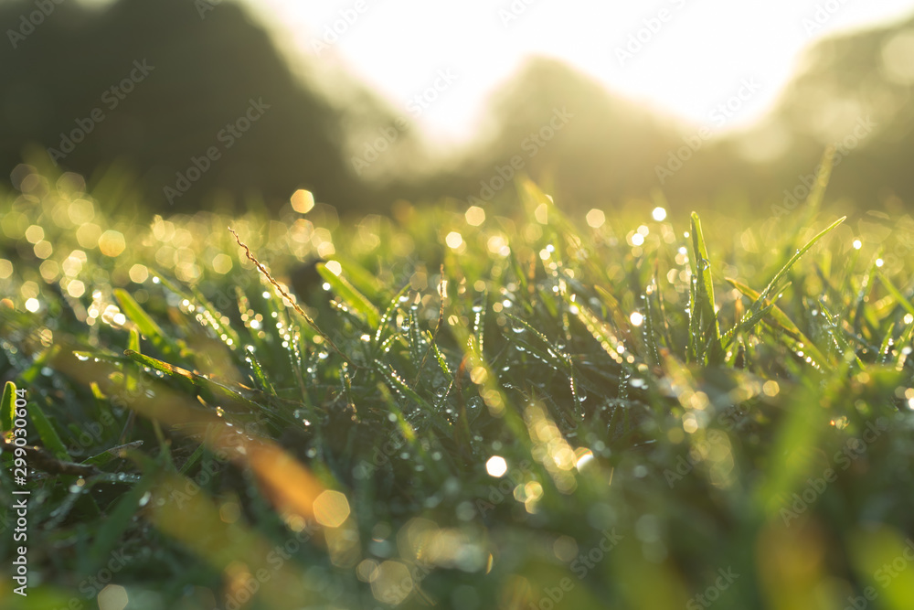 Fototapety, obrazy: waterdrop on grass and sunlight