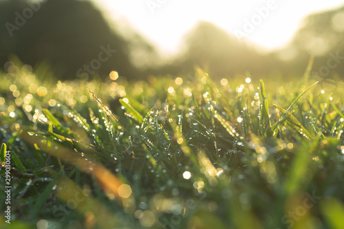 Poster Lente waterdrop on grass and sunlight