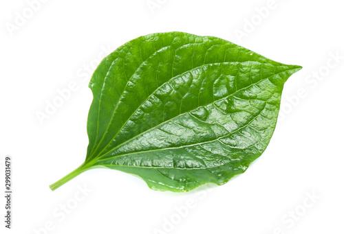Piper sarmentosum, Wildbetal leafbush leaf isolated on white Canvas Print