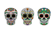 Set Of Hand Painted Skulls. Vector Illustration.