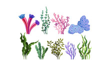 Set Of Colorful Sea Plants. Ve...