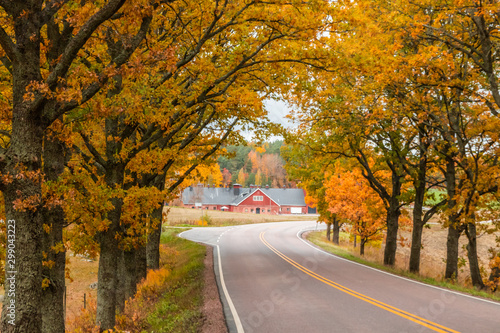 View of road with oak trees alley at autumn Fototapeta