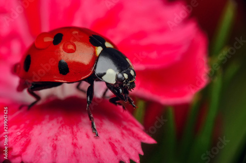 Cadres-photo bureau Papillon Beautiful ladybug on leaf defocused background