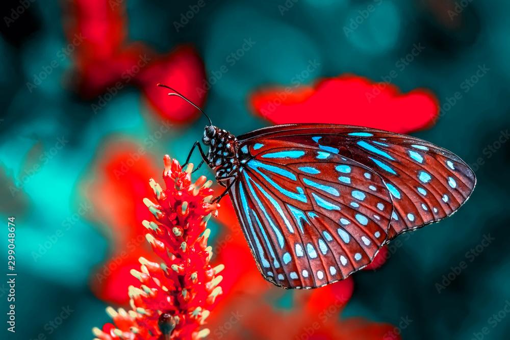 Fototapeta Beautiful butterfly sitting on flower in a summer garden
