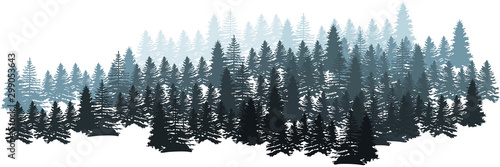Fototapeta Forest Silhouette Landscape. Coniferous Forest Panorama. Winter Christmas Forest of fir trees silhouette. Layered trees background. Vector obraz