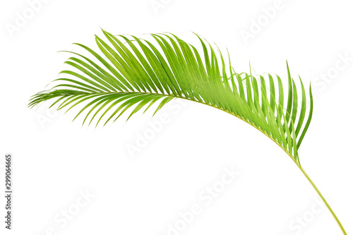 Papiers peints Route dans la forêt Yellow palm leaves, Golden cane palm, Areca palm leaves, Tropical foliage isolated on white background with clipping path