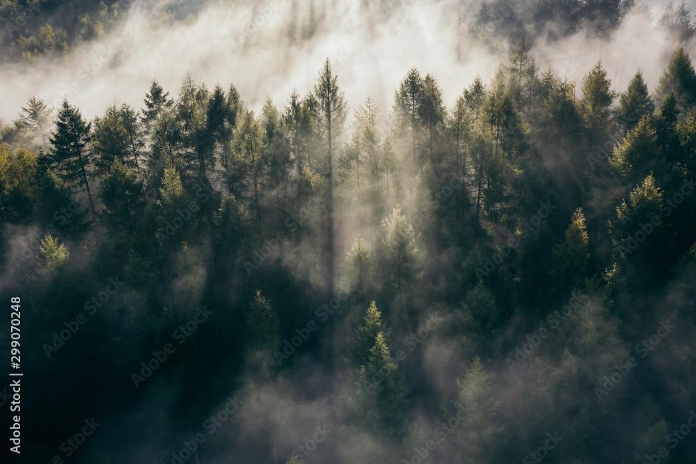 Fototapety, obrazy: Der Teutoburger Wald im Nebel