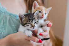 Close Up Of Two Cute Kittens I...