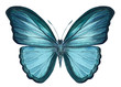 blue butterfly on an isolated white background, watercolor illustration, hand drawing, painting