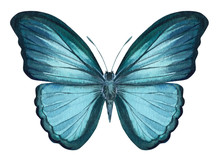 Blue Butterfly On An Isolated ...