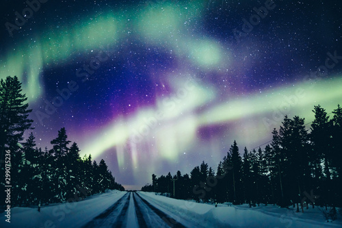 Wall Murals Northern lights Colorful polar arctic Northern lights Aurora Borealis activity in snow winter forest in Finland