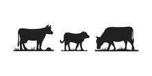 Cows In Different Poses Vector...
