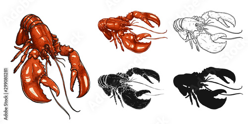 Photo Set of lobster by hand drawing