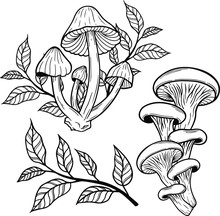Poison Mushroom Vector Hand Drawn Illustration Tattoo Sketch Style Isolated On White