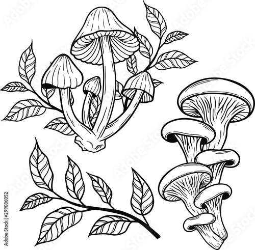 Slika na platnu poison mushroom vector hand drawn illustration tattoo sketch style isolated on w