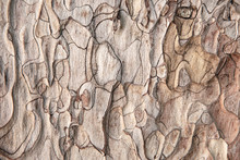 Close-up Of Grunge Textured Old Pine Tree Bark Texture. Abstract Nature Background For Design, Decor And Skins.