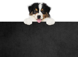 funny pet puppy dog showing a black placard isolated on white background blank template with copy space