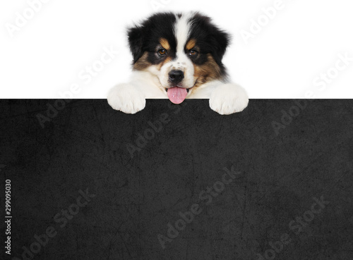 Photo sur Toile Chien funny pet puppy dog showing a black placard isolated on white background blank template with copy space