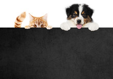 Puppy Dog And Cat Pets Togethe...