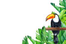 Card With Place For Text, Tropical Flowers, Toucan Bird Butterflies, Watercolor Drawing, Jungle Composition