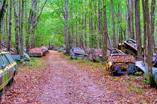 Fotografie, Tablou  Old Cars Alongside Road Through Woodland Junkyard