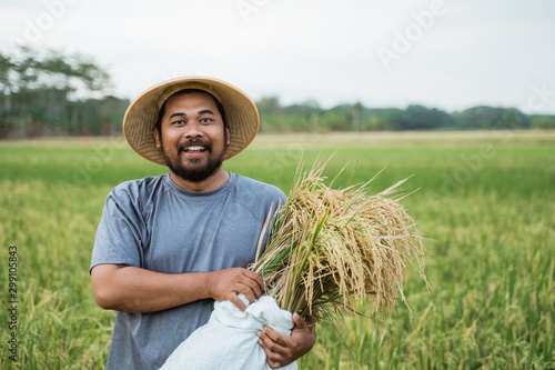 Fotomural excited young farmer after harvesting his rice in the field smiling to camera
