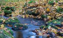 Nice Small Forest Brook, Stream With Colorful Autumn Leaves, Long Exposure Photograph, Czech Landscape