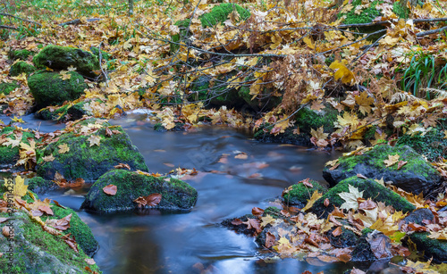 Garden Poster Forest river Nice small forest brook, stream with colorful autumn leaves, long exposure photograph, Czech landscape