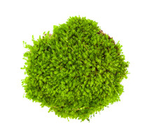 Green Moss  Isolated On A Whit...