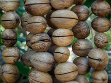The Texture Of The Dry Shell Of A Decorative Fruit Hanging On Threads. Thailand
