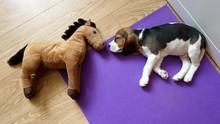 Sweet Little Dog Sleeping On T...
